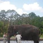 The Steve Irwin Australia Zoo in Beerwah, Queensland Picture gallery