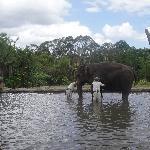 The Steve Irwin Australia Zoo in Beerwah, Queensland Story Sharing