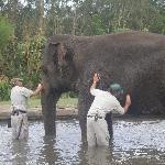 The Steve Irwin Australia Zoo in Beerwah, Queensland Album Pictures