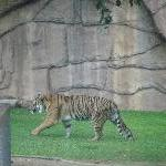 The Steve Irwin Australia Zoo in Beerwah, Queensland Travel Package