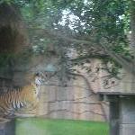 The Steve Irwin Australia Zoo in Beerwah, Queensland Album Photos