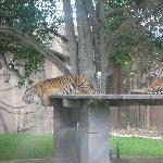 The Steve Irwin Australia Zoo in Beerwah, Queensland Vacation Photos