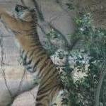 The Steve Irwin Australia Zoo in Beerwah, Queensland Album Photographs