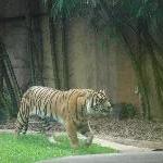 The Steve Irwin Australia Zoo in Beerwah, Queensland Blog Photography