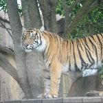 The Steve Irwin Australia Zoo in Beerwah, Queensland Travel Photo