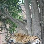 The Steve Irwin Australia Zoo in Beerwah, Queensland Holiday Photos