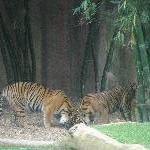 The Steve Irwin Australia Zoo in Beerwah, Queensland Blog Review