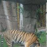 The Steve Irwin Australia Zoo in Beerwah, Queensland Diary Information