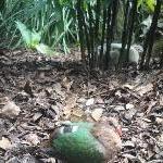 The Steve Irwin Australia Zoo in Beerwah, Queensland Diary Tips