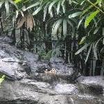 The Steve Irwin Australia Zoo in Beerwah, Queensland Holiday Tips