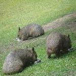The Steve Irwin Australia Zoo in Beerwah, Queensland Diary