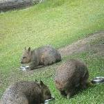 The Steve Irwin Australia Zoo in Beerwah, Queensland Diary Picture