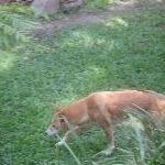 The Steve Irwin Australia Zoo in Beerwah, Queensland Travel Tips