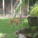 The Steve Irwin Australia Zoo in Beerwah, Queensland Diary Pictures