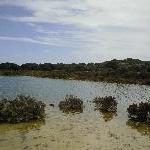 Rottnest Island lakes and birdlife
