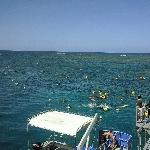 Snorkelling platform at Great Barrier Reef