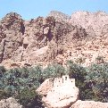 Muscat Oman Bird sounds from Canyon Walls at Wadi Tiwi