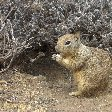 Cute Squirrel at Grand Canyon NP