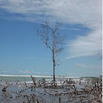 Photos of mangroves in Jericoacoara
