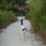 Lost kitty kat on Sunset Beach