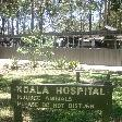The Koala hospital in Port Macquarie