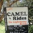 Port Macquarie Australia Camel Rides on Matthew Flinder Dr.