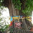 Savannakhet Province Laos Colourful offerings on a tree