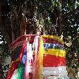 Sacred tree decorations in Savannakhet