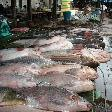 Pictures of the fish market in Cambodia, Stung Treng Cambodia