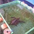 Baby turtle at Ocean Park