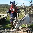 Beautiful reindeer on North Cape, Bergen Norway