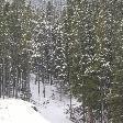Calgary Canada Snow in the trees