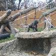Playful monkey in Calgary