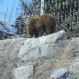 Canadian habitat in the zoo