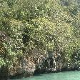 The mangroves in the laggon