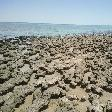 The stromatolites of Hamelin Pool