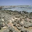 The stromatolites of Shark Bay