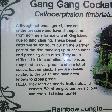 Gang Gan Cockatoos in Kalbarri, Kalbarri Australia