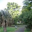 The Sydney Royal Botanical Gardens