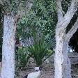 White Ibis in the Royal Gardens