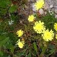 Pictures of flora Kangaroo Island