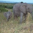 Elephant and baby in Kenya