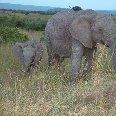 Elephant and baby in Kenya, Masai Mara Kenya