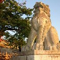 Tokyo Japan Japanese lion statue