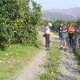 Picking oranges on a cycle tour , Crete Greece