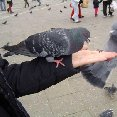 Photos of the pigeons in Venice., Venice Italy