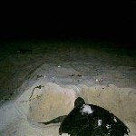 Photos of the turtles in Cayo Largo.