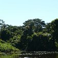 Photos of the Bolivian rainforest., Rurrenabaque Bolivia
