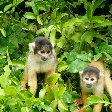 Two little monkeys in the pampas, Bolivia.