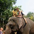 Riding the elephants in Kochi.